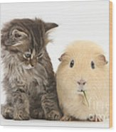Tabby Kitten With Yellow Guinea Pig Wood Print