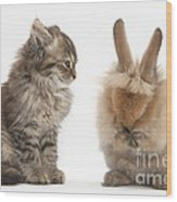 Tabby Kitten With Young Rabbit, Grooming Wood Print