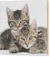 Tabby Kittens Cuddling Wood Print