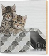 Tabby Kittens In Gift Box Wood Print