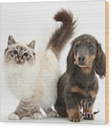 Tabby-point Birman And Dachshund Pup Wood Print
