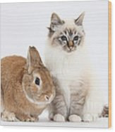 Tabby-point Birman Cat And Rabbit Wood Print