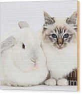 Tabby-point Birman Cat And White Rabbit Wood Print