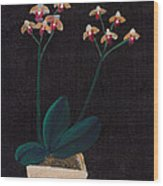 Table Orchid Wood Print