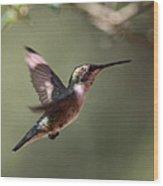 Tad Of Sunshine - Hummingbird Wood Print