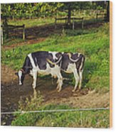 Tail Of Two Cows Wood Print