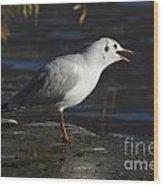 Talking Bird Wood Print