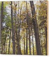 Tall Fall Trees Wood Print