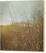 Tall Grass Growing In Late Autumn Wood Print by Sandra Cunningham
