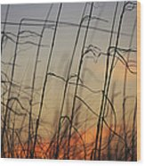 Tall Grasses Blowing In The Wind Wood Print
