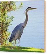 Tall Grey Heron Wood Print