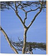 Tall Serengeti Tree And Baboon Wood Print
