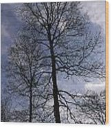 Tall Silhouetted Trees Wood Print