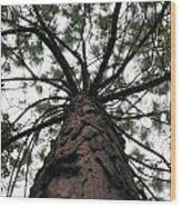 Tall Tree Wood Print