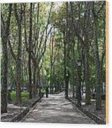Tall Trees Of Madrid Wood Print