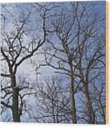 Tall Trees Reaching For A Blue Sky Wood Print