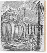 Taming Wild Elephants Wood Print