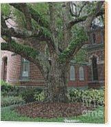 Tampa Tree  Wood Print