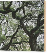 Tampa Trees Wood Print