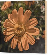 Tanacetum Painted In Red Wood Print