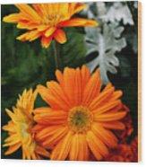 Tangerine Colored Gerbera Daisies Wood Print