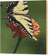 Tantalizing Tiger Swallowtail Butterfly Wood Print