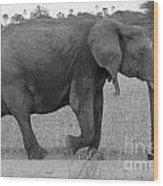 Tarangire Elephant On Road Wood Print