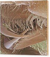Tarantula Fangs Wood Print