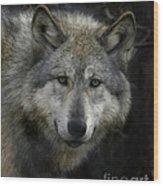Tashina  Beauty Of The Mountain Wood Print by Deborah  Smith