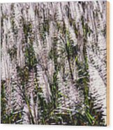 Tasseled Sugarcane Wood Print
