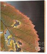 Tattered Leaf Wood Print