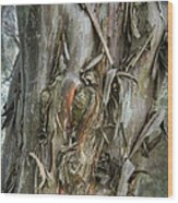 Tattered Tree Wood Print