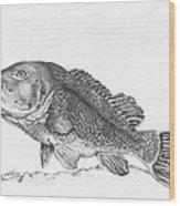 Tautog Wood Print