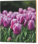 Taylor's Tulips Wood Print