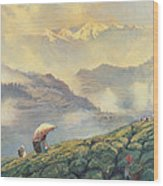 Tea Picking - Darjeeling - India Wood Print