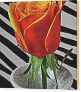 Tea Rose In Striped Vase Wood Print