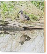 Teal Duck Standing On A Log Wood Print