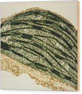 Tem Of A Chloroplast From A Tobacco Leaf Wood Print