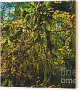 Temperate Rain Forest Wood Print