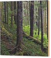 Temperate Rain Forest, Carmanah-walbran Wood Print