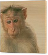 Temple Monkey Wood Print