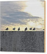 Ten Seagulls Stand On Top Of Stucco Wall Wood Print