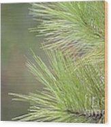 Tender Pines Wood Print