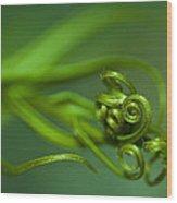 Tendrils Wood Print by Zoe Ferrie