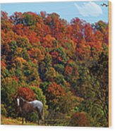 Tennessee Fall Wood Print