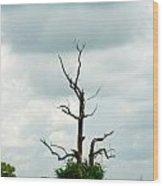 Tennessee Lone Tree Wood Print
