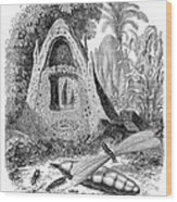 Termite Mound And Castes Wood Print by