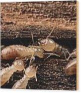 Termites Wood Print by George Grall