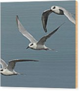 Terns In Formation Wood Print