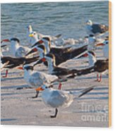 Terns Wood Print